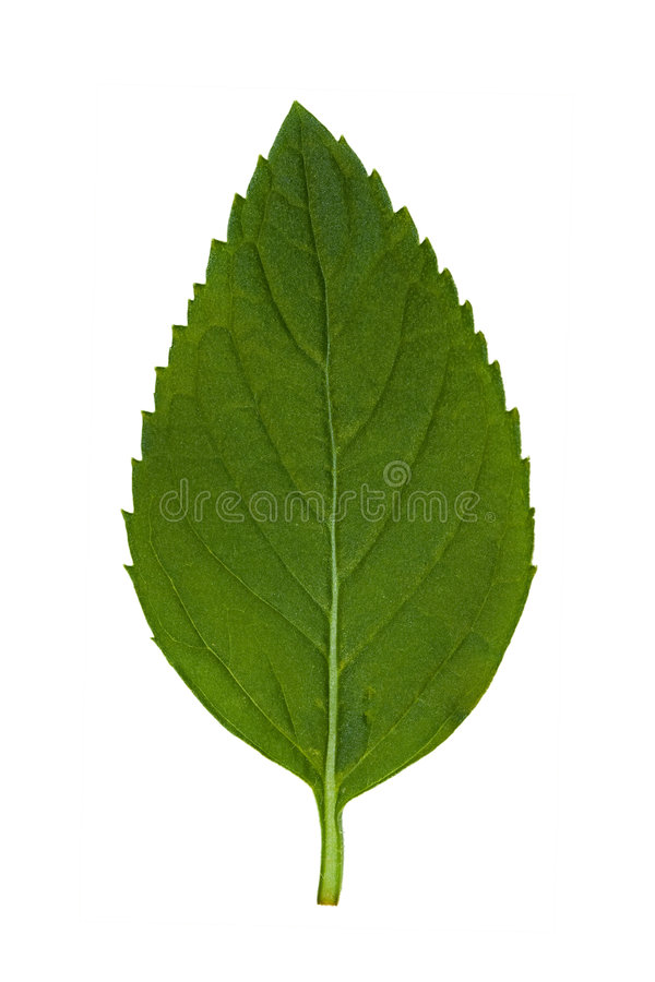 Free Leaf 1 Stock Images - 2807654