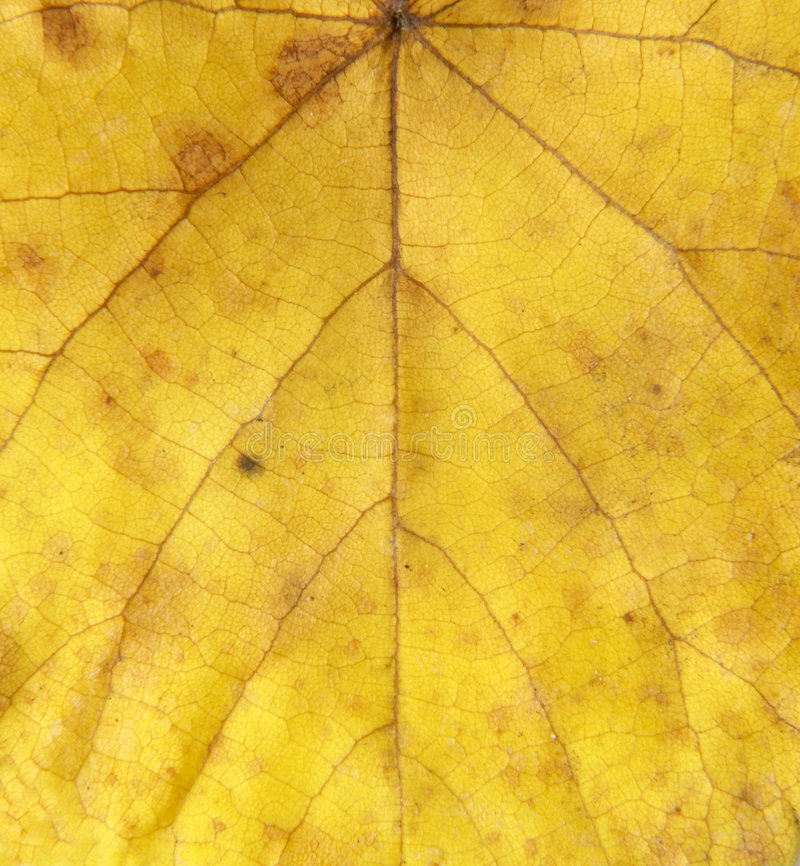 Leaf 10 royalty free stock images