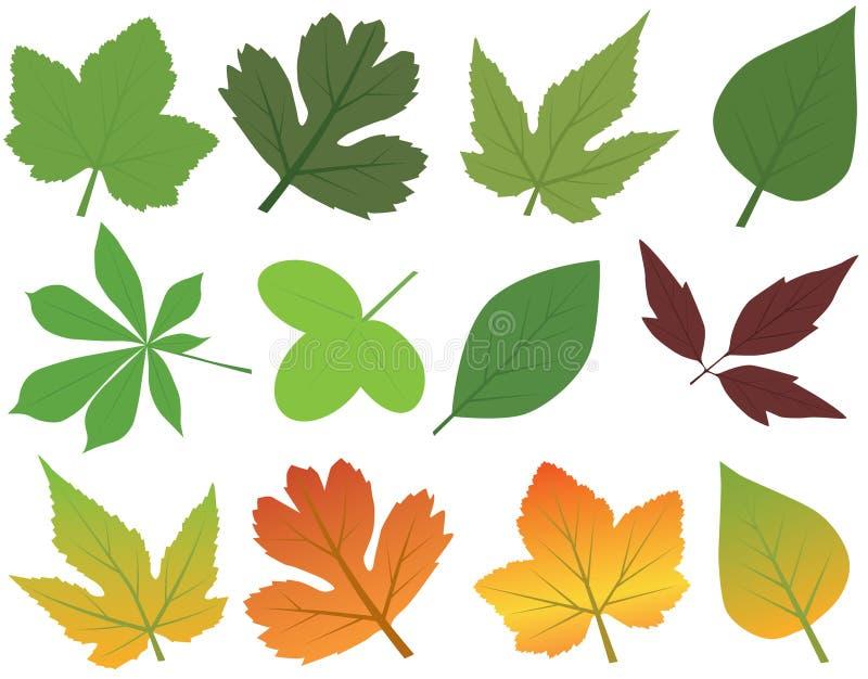 Leaf royalty free illustration