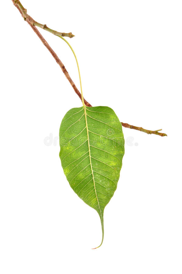 Download Leaf stock photo. Image of grow, leaf, horticulture, team - 10193916
