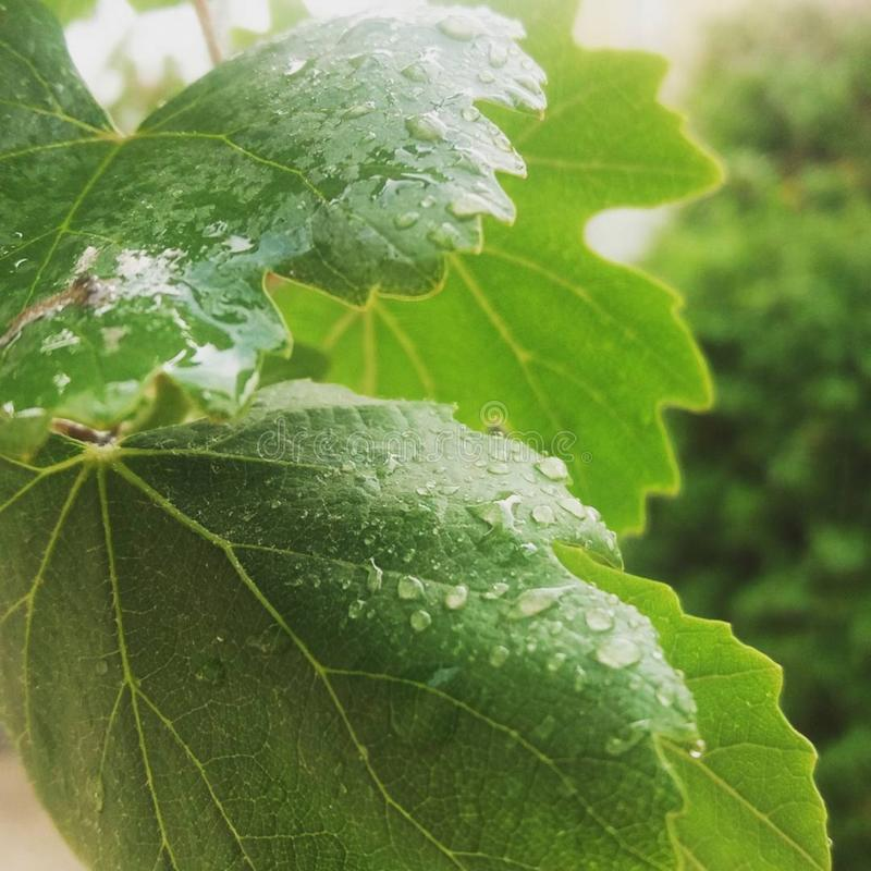 Leaf Free Public Domain Cc0 Image