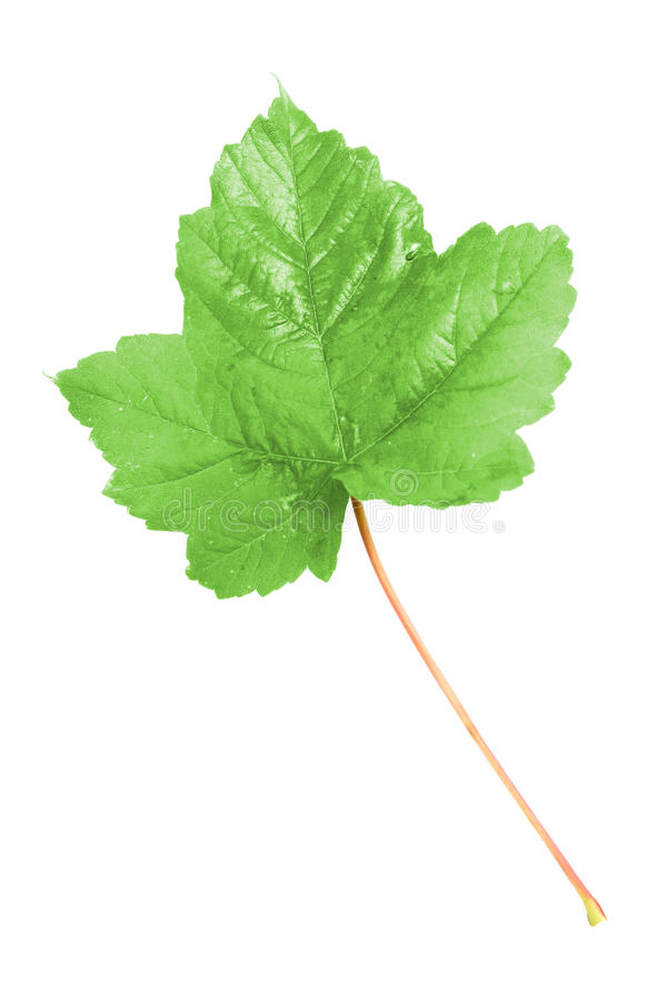 Download Leaf stock image. Image of objects, decoration, colored - 11585765