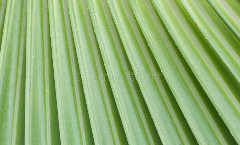 Download Leaf stock image. Image of diagonal, evergreen, cool - 13412239