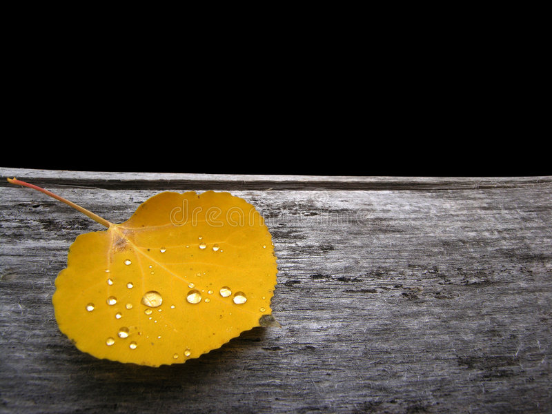 Download Leaf stock photo. Image of dried, background, wooden, dead - 1405536