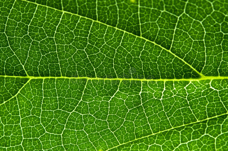 Download Leaf Stock Photo - Image: 14493150