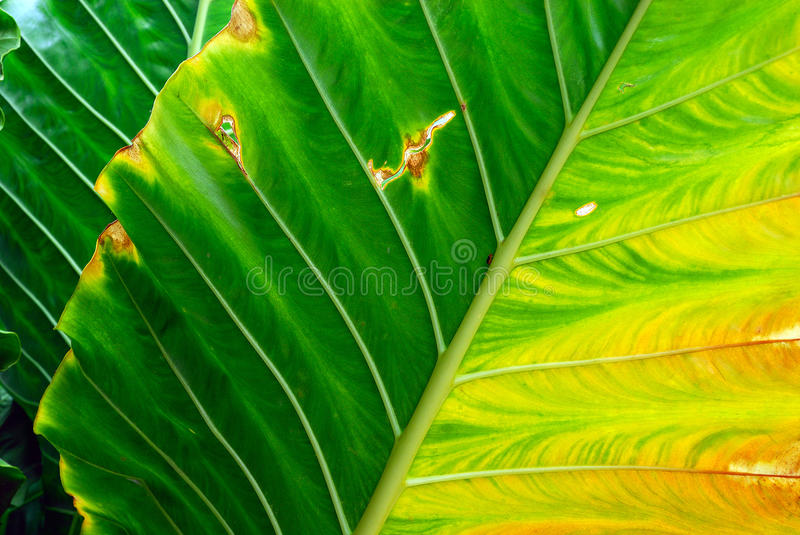 Download The leaf stock photo. Image of abstract, design, background - 14718232
