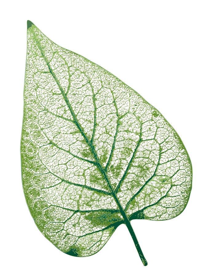 leaf vektor illustrationer