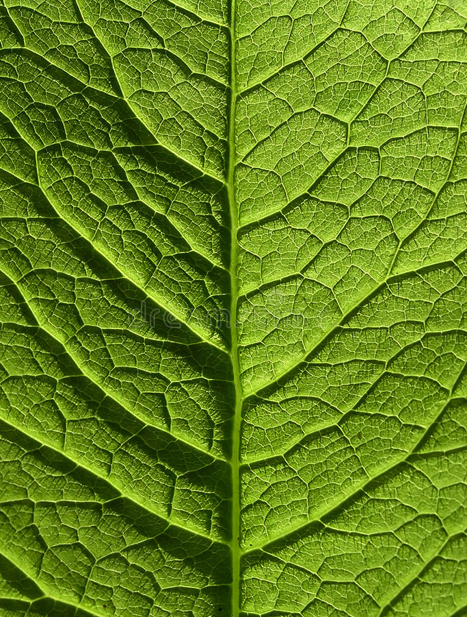 Download Leaf stock image. Image of details, sunshine, nature, color - 152073