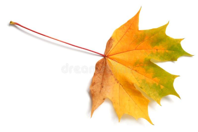 leaf arkivbild