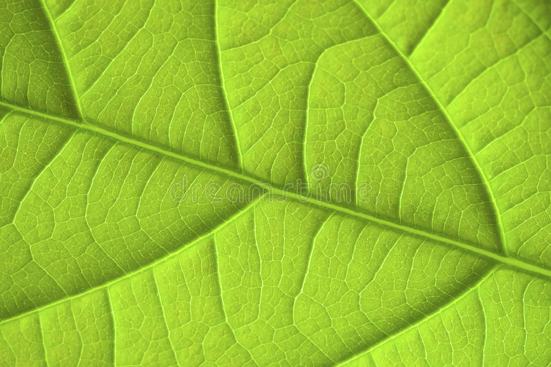 Download Leaf stock photo. Image of environment, garden, beauty - 18300634