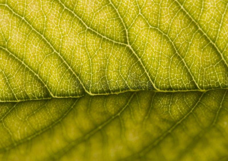 Download Leaf stock photo. Image of leaf, fibers, lifeless, beauty - 2006052