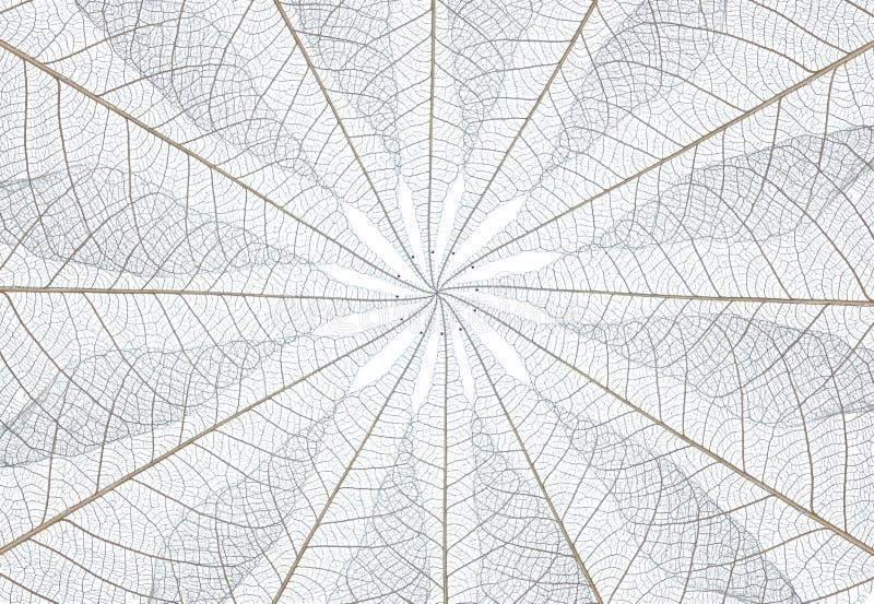 Download Leaf stock image. Image of details, dirty, element, part - 20454875