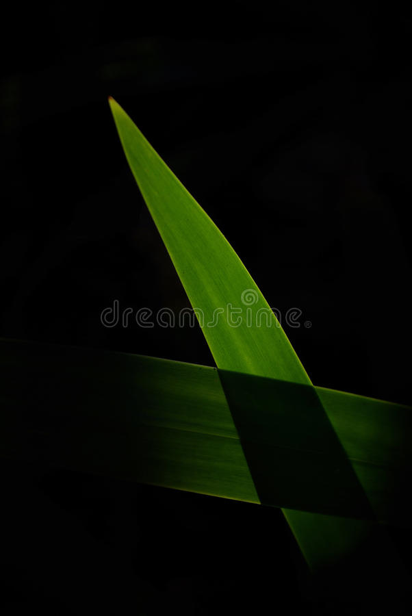 Download Leaf stock image. Image of darkness, background, grain - 21566801