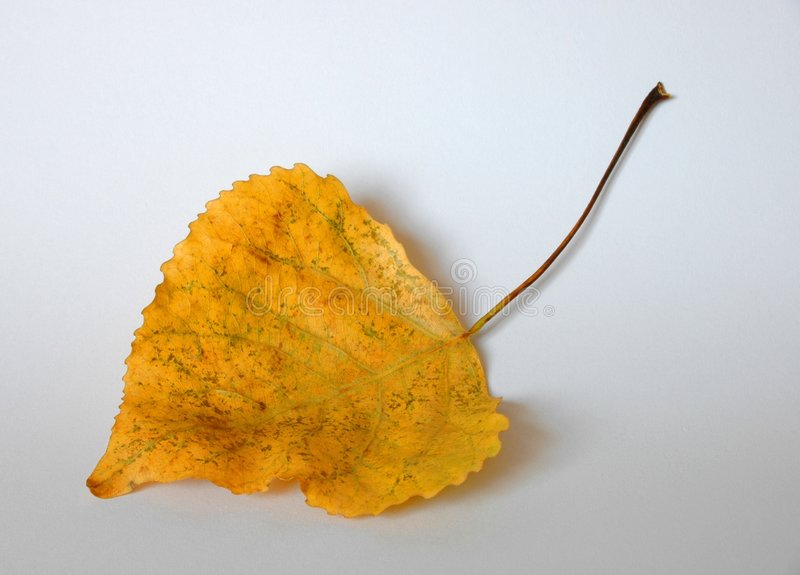 Download Leaf stock photo. Image of laminated, trees, sheet, layer - 22194