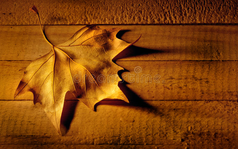 Download Leaf stock photo. Image of nature, backdrop, copyspace - 22310858