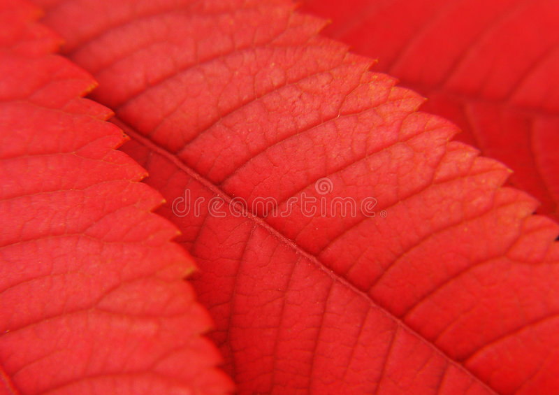 Download Leaf stock photo. Image of beauty, colorful, close, gardening - 2328256