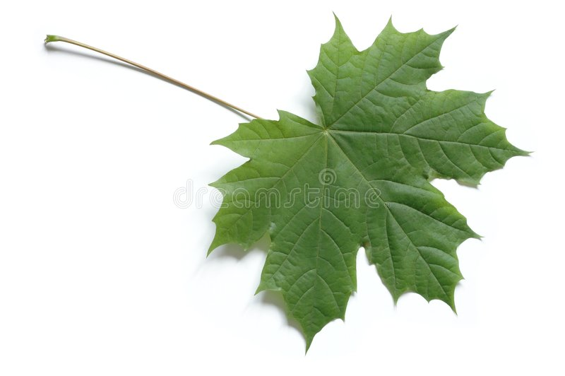 Leaf stock photo