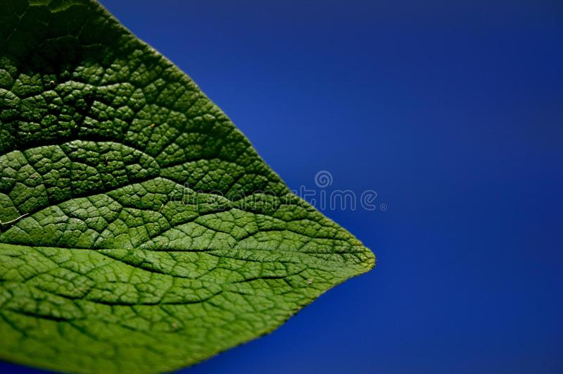 Leaf Free Stock Photography