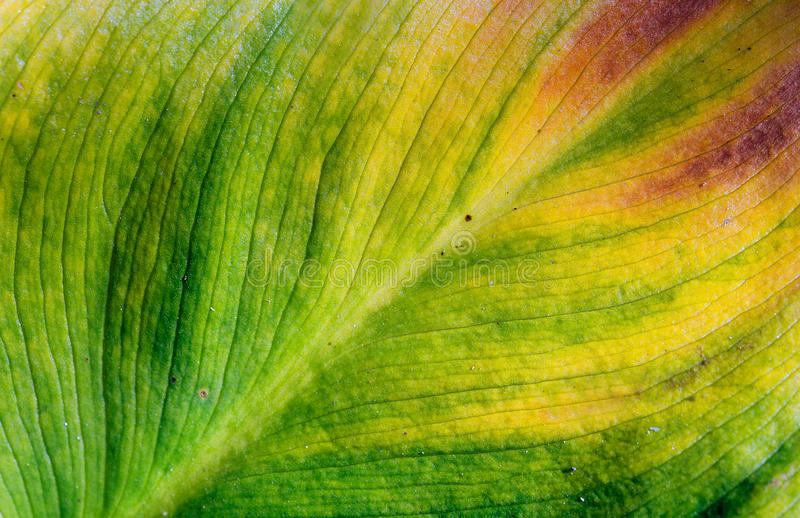 Download Leaf stock photo. Image of botany, beauty, agriculture - 27060670