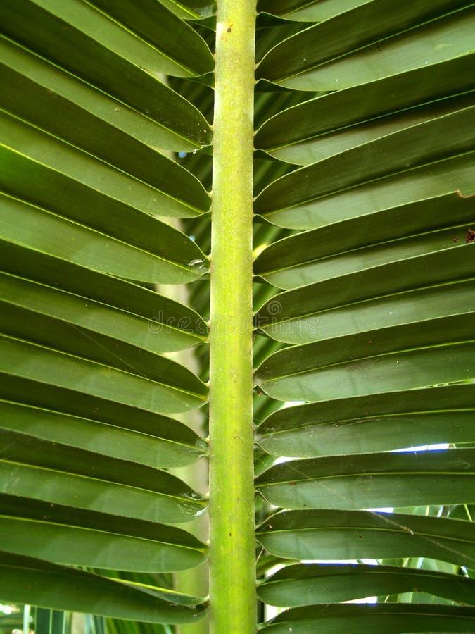 Free Leaf 3 Royalty Free Stock Photo - 1630805