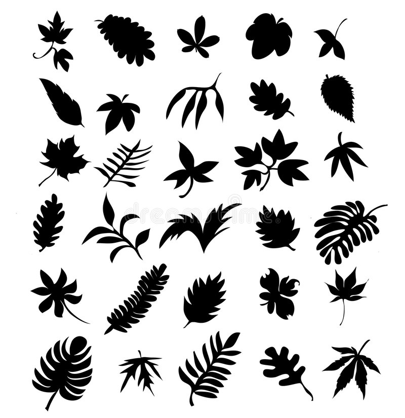 Free Leaf 3 Royalty Free Stock Images - 8534829