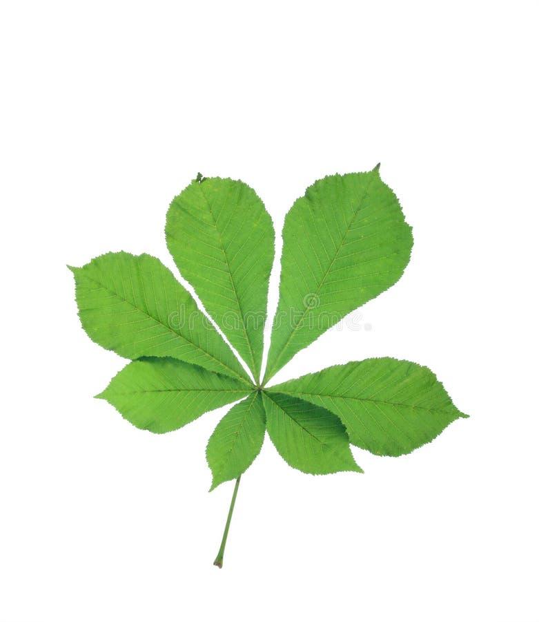 Free Leaf Royalty Free Stock Photo - 3135005