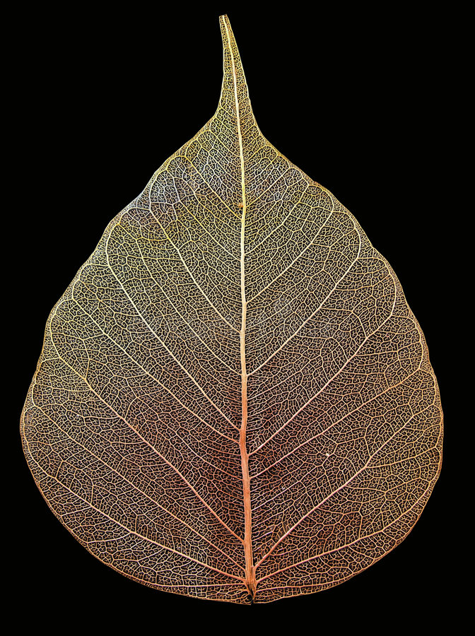 Free Leaf Stock Photography - 3550032