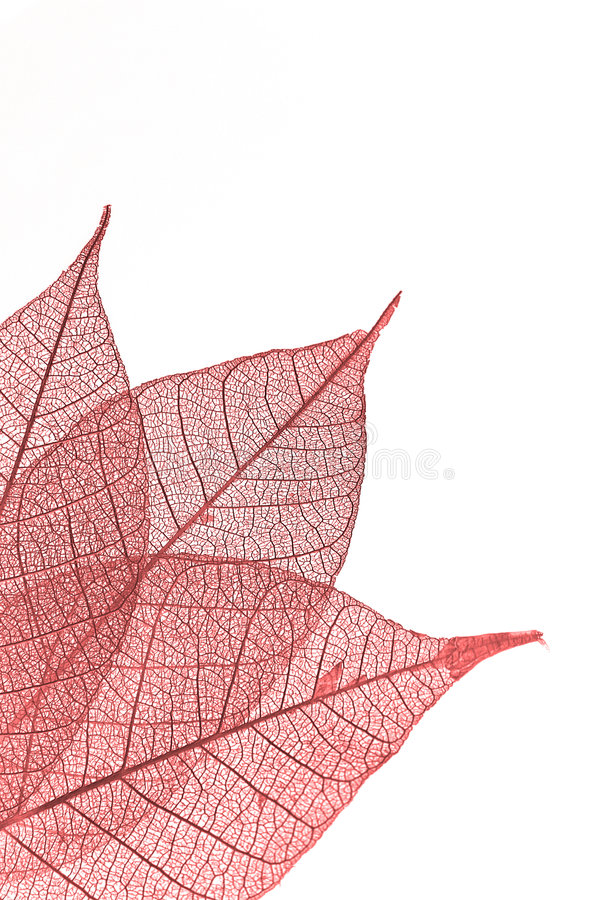 Download Leaf stock photo. Image of delicate, object, overlapping - 4532854