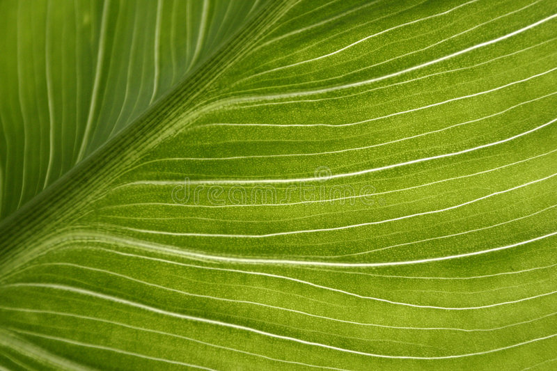 Download Leaf stock photo. Image of amazing, health, fresh, details - 466204