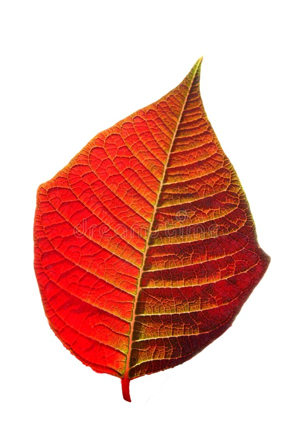 Free Leaf Stock Photography - 4992192