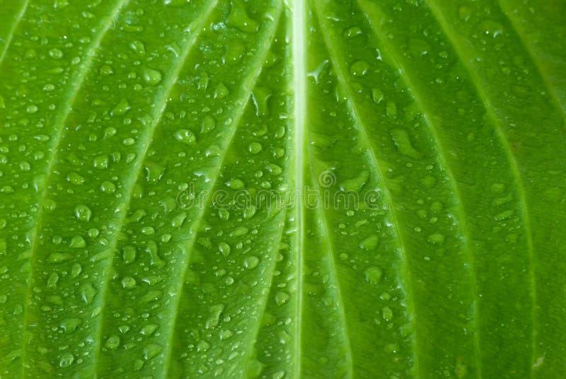 Download Leaf stock image. Image of rain, vein, development, environmental - 6961285