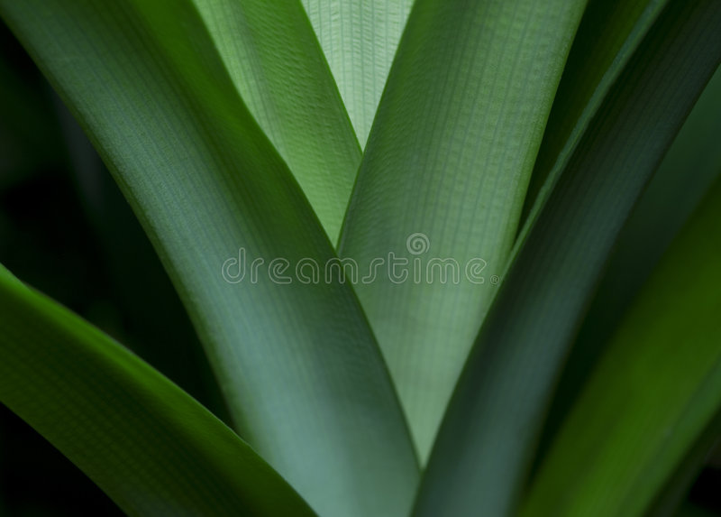 Download Leaf stock image. Image of plant, shapes, nature, pattens - 7111717