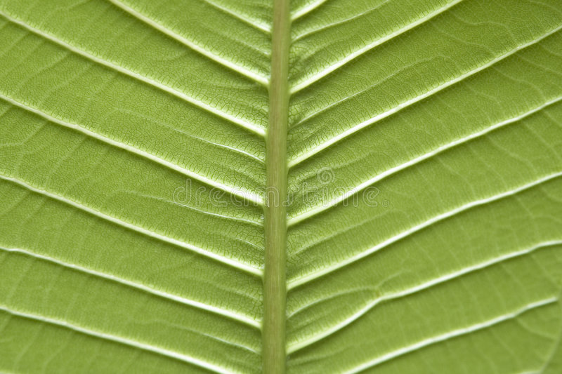 Download Leaf stock photo. Image of leaf, tree, green, close, pattern - 72952