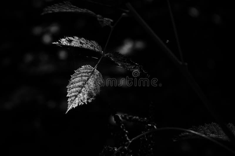 Leaf0 Free Public Domain Cc0 Image