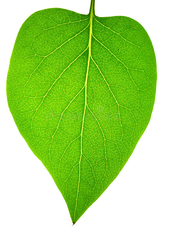 Leaf stock photos