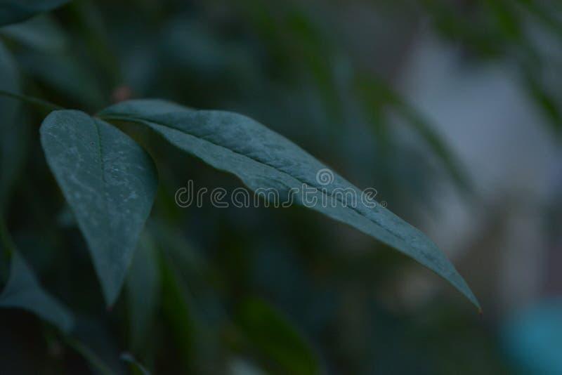 leaf royaltyfria foton