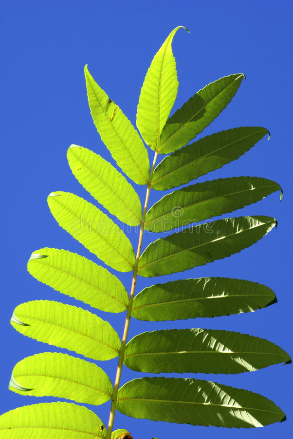 Free Leaf Against The Sky Stock Images - 2438804