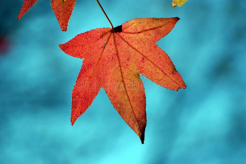 Download Leaf in Autumn stock image. Image of seasonal, peaceful - 467595
