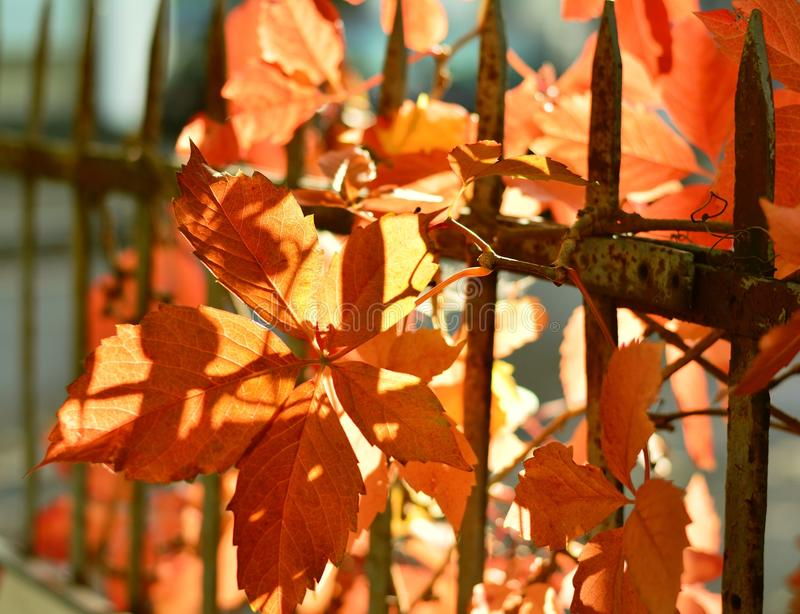 Leaf, Autumn, Flora, Plant Free Public Domain Cc0 Image