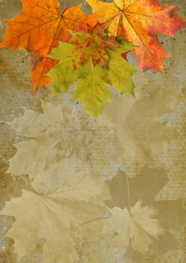 Download Leaf autumn maple  grunge stock photo. Image of rectangle - 26800998