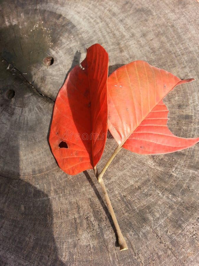 leaf royalty free stock photo