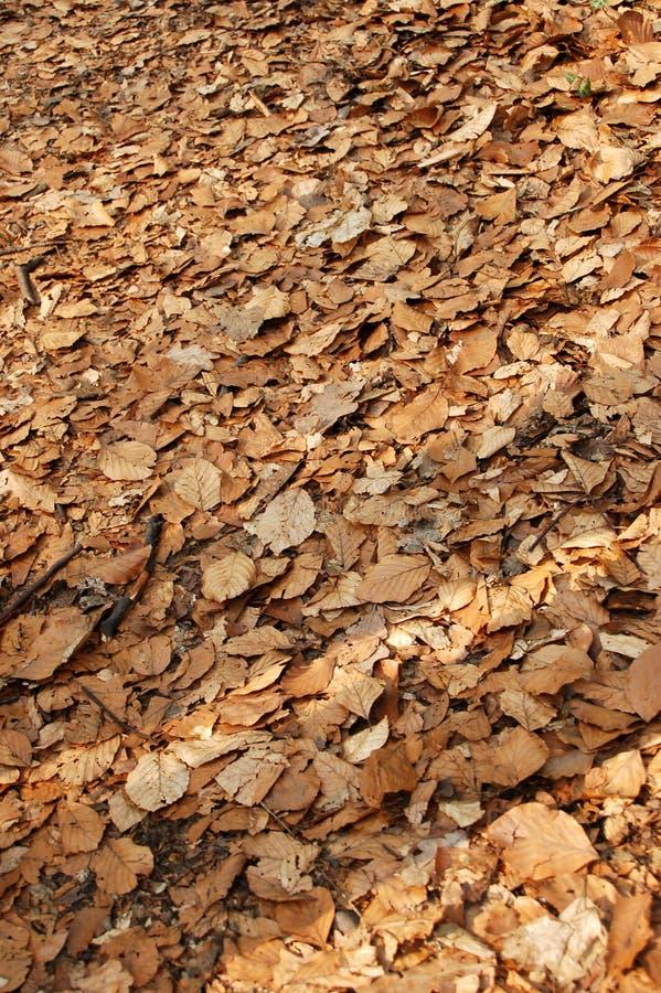 Leaf background #1 royalty free stock image