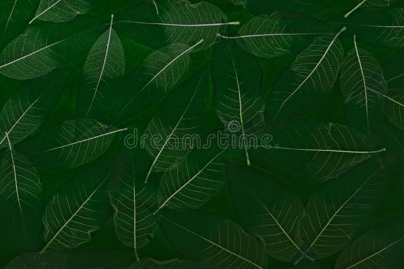 Download Leaf Background Royalty Free Stock Photo - Image: 14252205
