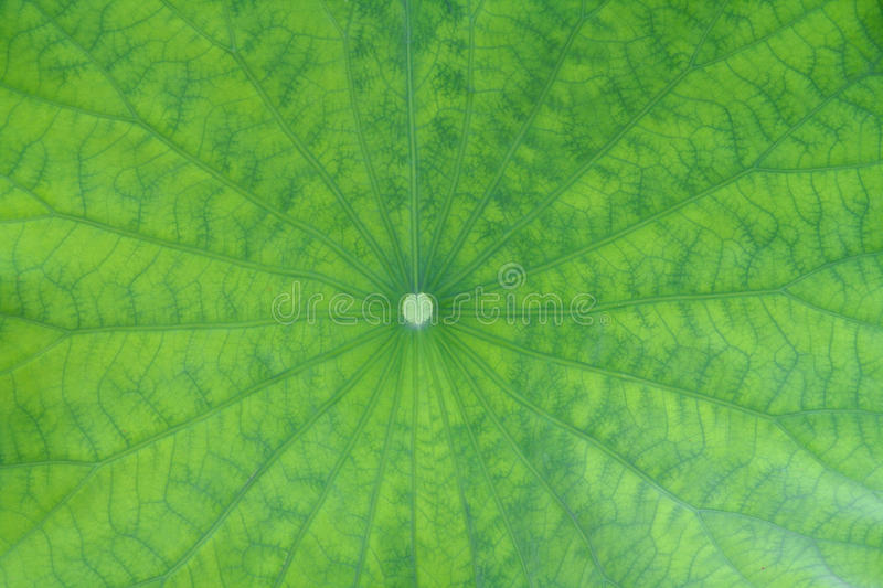 Download Leaf background stock photo. Image of backdrop, macro - 14860956