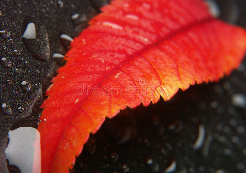 Download Leaf background stock photo. Image of abstract, fibres - 2328024