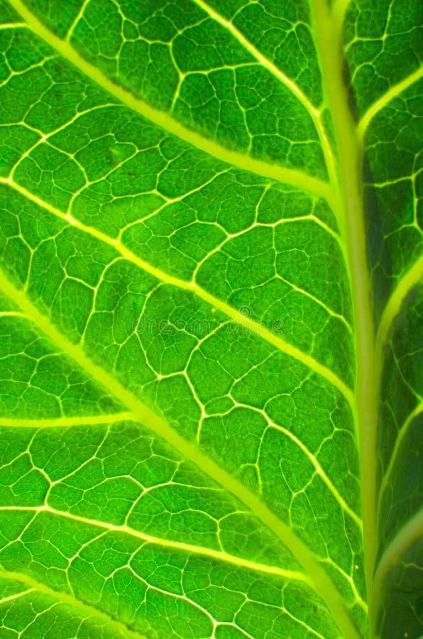 Download Leaf background stock image. Image of botanical, system - 27013847