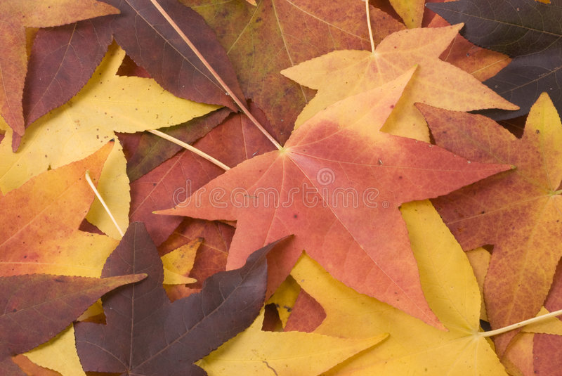 Download Leaf Background Royalty Free Stock Image - Image: 7083406