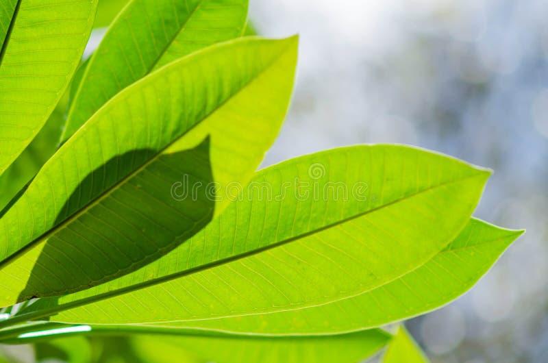 Leaf background baner royalty free stock photos