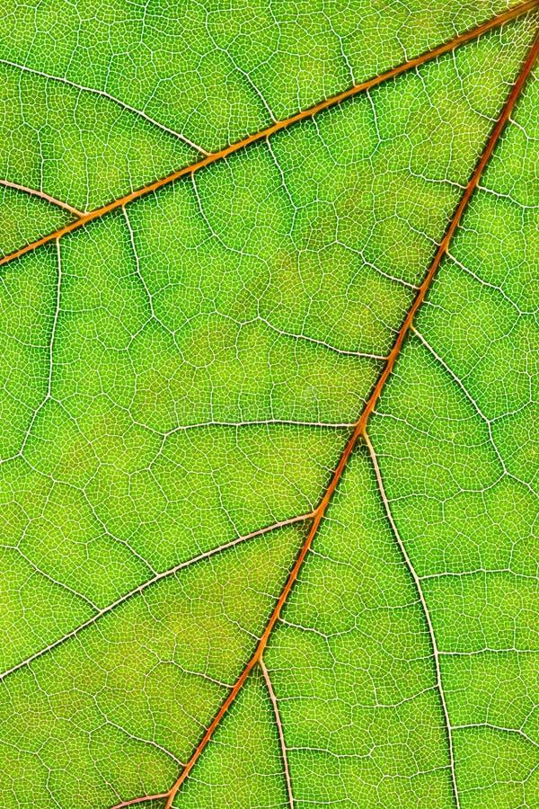 Leaf Background Vertical Royalty Free Stock Images