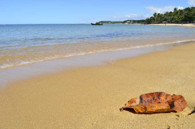 Leaf on the beach royalty free stock image